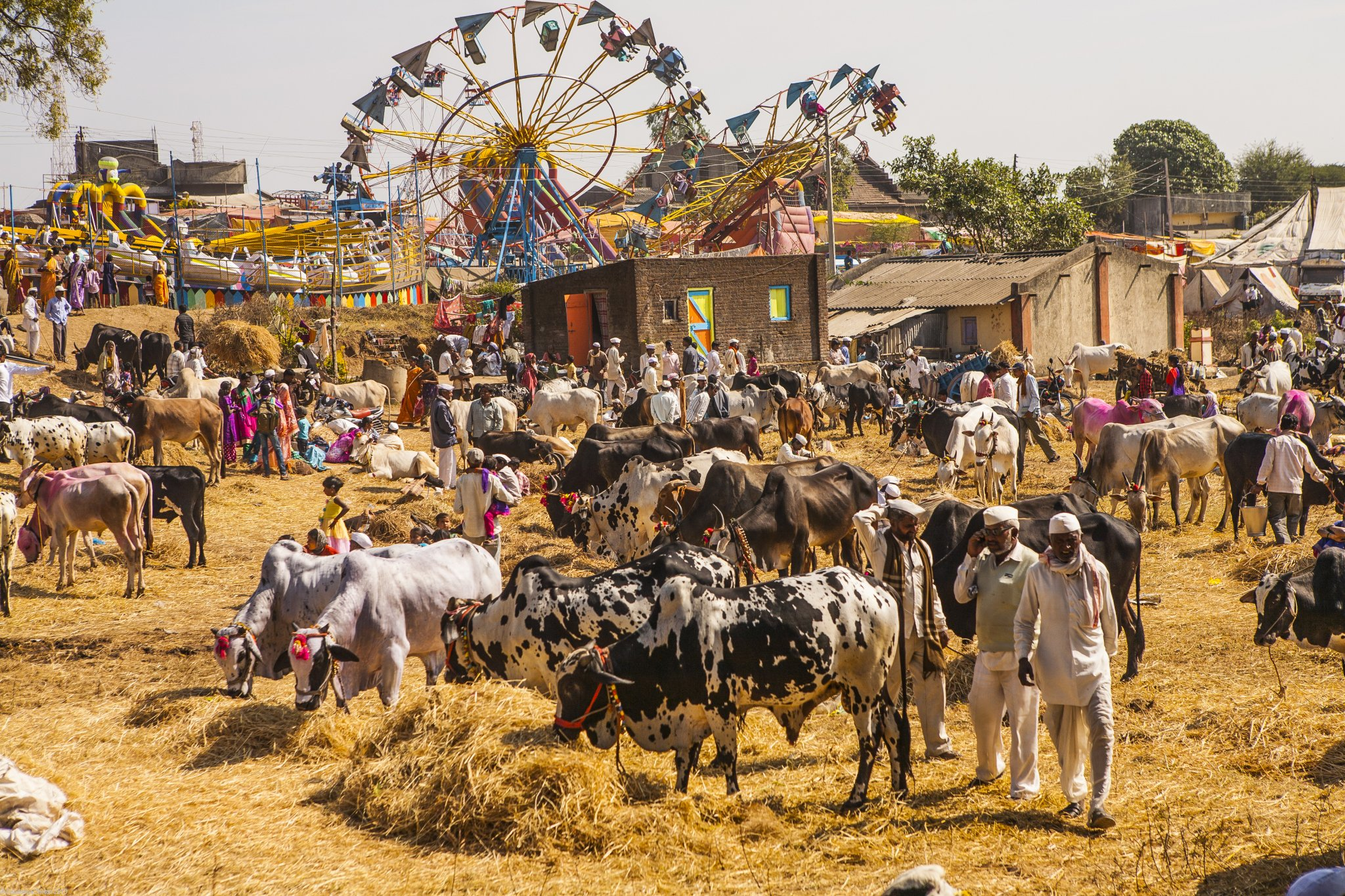 Weekly rural market, an Indian bazaar, the biggest of the year, a village fair with rides like the giant wheel and a cattle fair where farmers trade their cattle specially their bulls or bullocks in the market town of Rajur in rural Maharashtra, India.