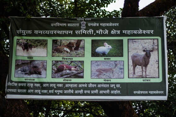 Board put around the forest by the forest department in Mahabaleshwar, the most famous hill station in Maharashtra, India.