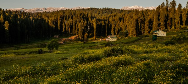 Yusmarg: Should you stay here on your Kashmir trip?