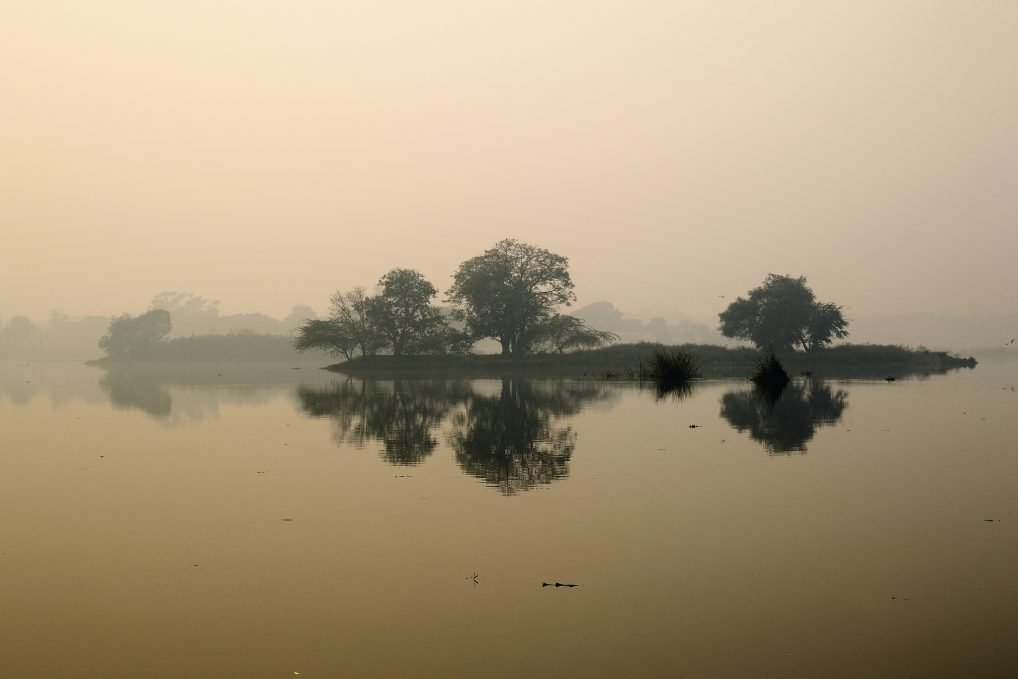 Okhla bird sanctuary in Delhi