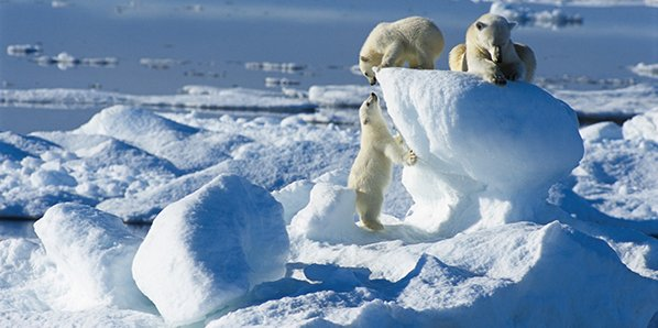 How to choose the right Spitsbergen Cruise